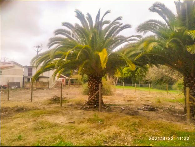 Foto Terreno en Venta en  Salinas ,  Canelones  a metros de la Rambla