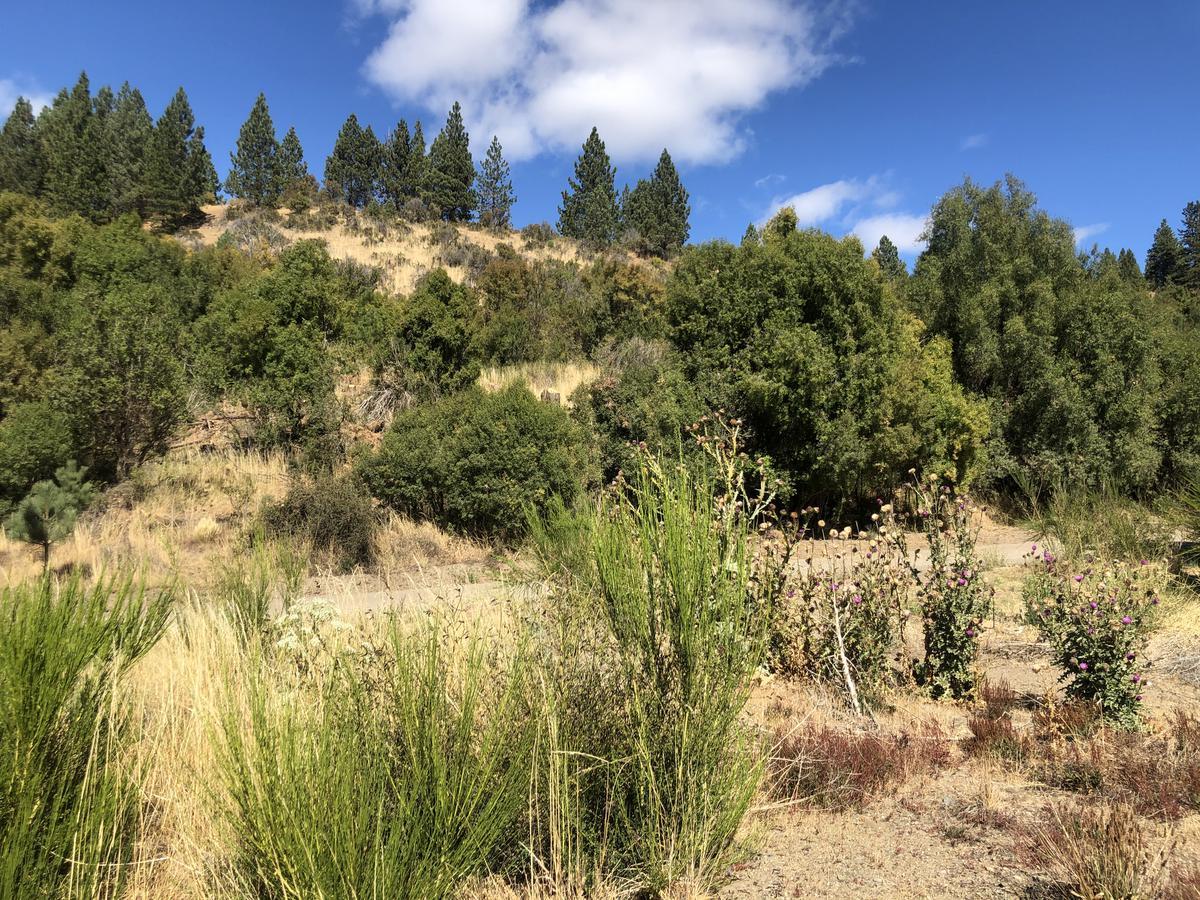 Foto Terreno en Venta en  Esquel,  Futaleufu  El Maitenal, Villa Ayelén