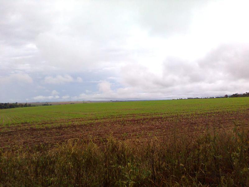 Foto Campo en Venta en  Nueva Esperanza,  Nueva Esperanza  Troncal 4, camino a Puerto Marangatú