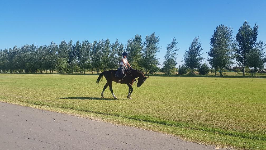 Foto Terreno en Venta en  La Rinconada,  Ibarlucea  Ruta 34 Km 10