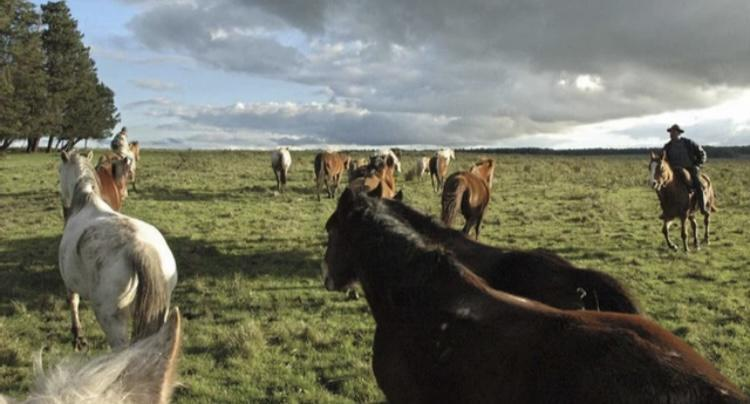 Foto Terreno en Venta en  Fray Bentos ,  Río Negro  Uruguay