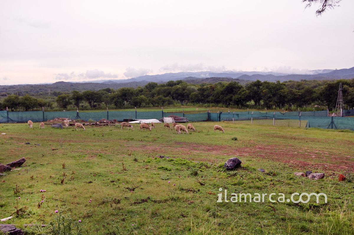 Foto Terreno en Venta en  Jose De La Quintana,  Santa Maria  Campo Jose de la Quintana