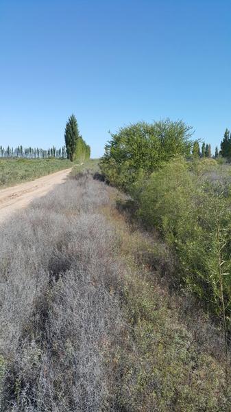 Foto Fincas en Venta en  Jocoli Viejo,  Lavalle  Finca Jocoli, Ruta 40 km52