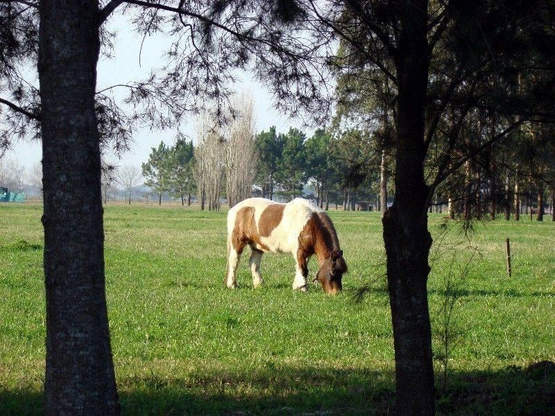 Foto Chacra en Venta en  Countries/B.Cerrado (Exaltación),  Exaltacion De La Cruz  Countries/B.Cerrado (Exaltación)