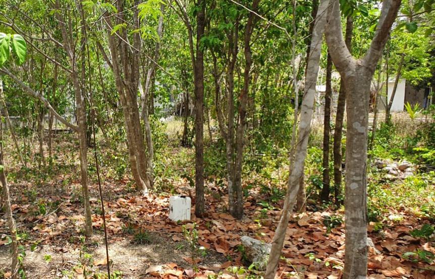 Foto Terreno en Venta en  Tulum Centro,  Tulum  Terreno en venta con desarrollo en Tulum