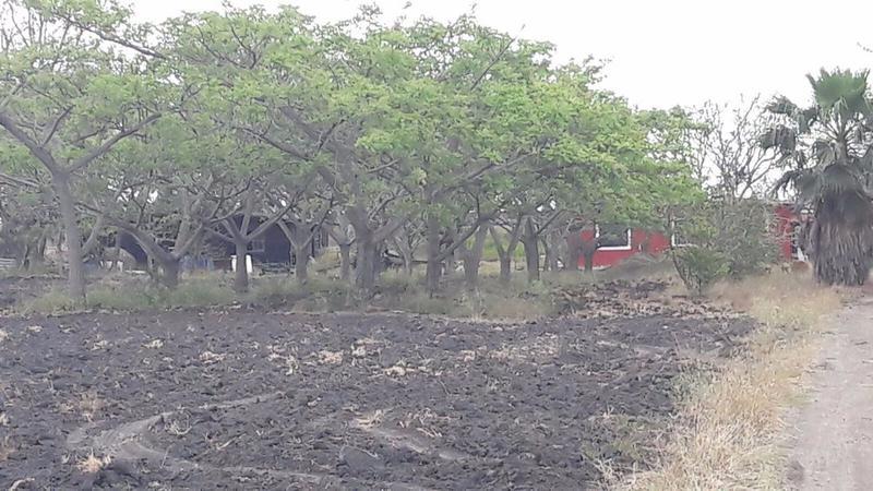Foto Terreno en Venta en  Altamira ,  Tamaulipas  CTV2055-285 Carretera Tampico-Mante Terreno
