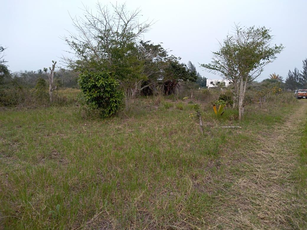 Foto Terreno en Venta |  en  Tampico Alto Centro,  Tampico Alto  Laguna de Tamiahua
