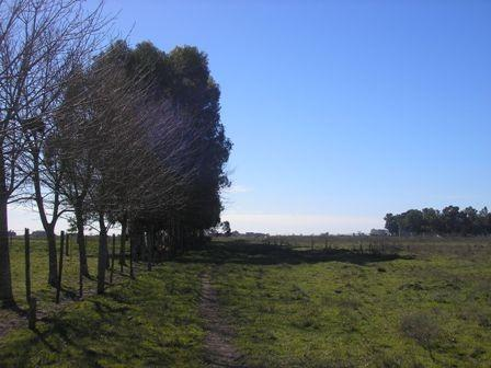 Foto Campo en Venta en  Capital ,  Santiago Del Estero  1000 Hs S/ Ruta 34