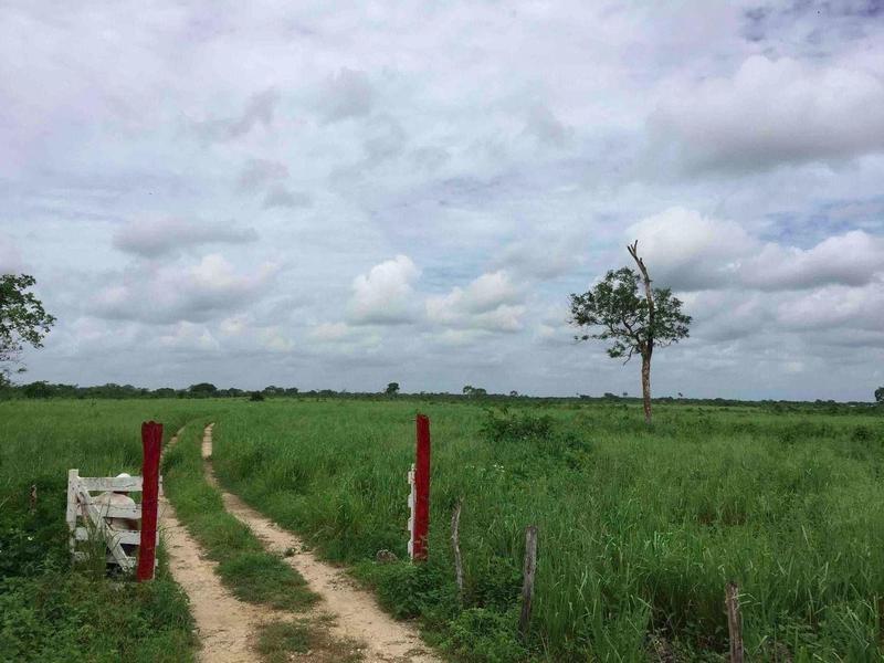 Foto Quinta en Venta en  Ciudad Izamal,  Izamal  Venta de Rancho Agrícola Ganadero 1,500 Hectareas en Yucatan