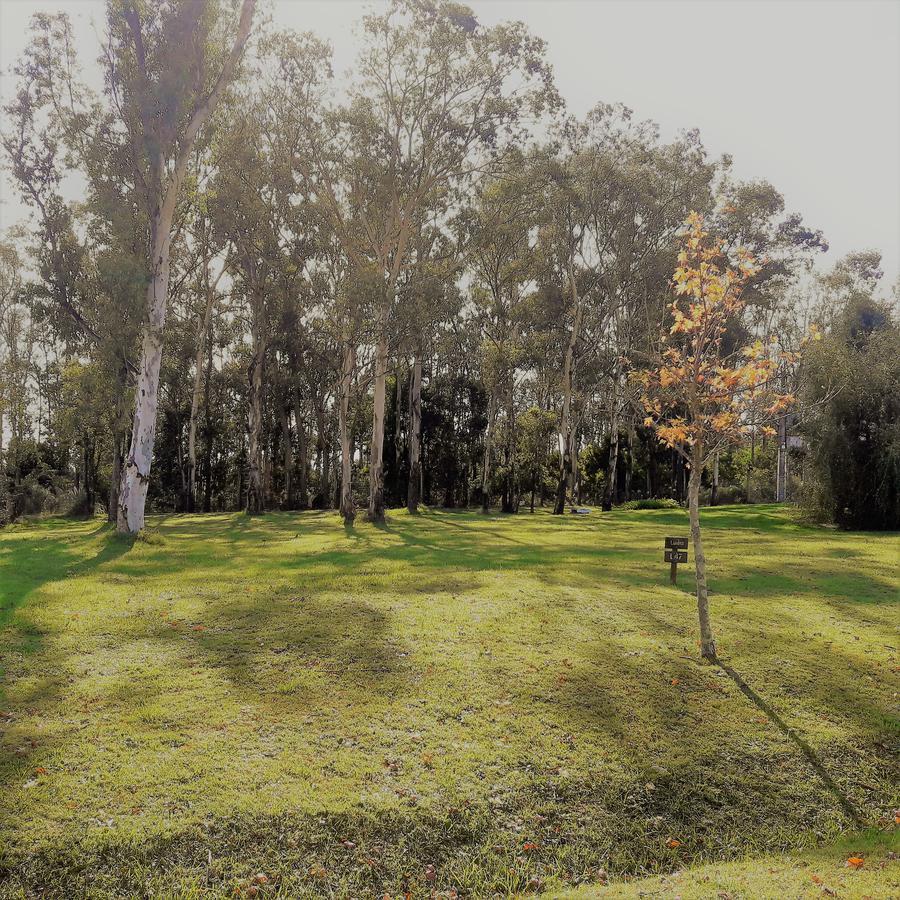Foto Terreno en Venta en   Cumbres de Carrasco,  Countries/B.Cerrado (Carrasco)  Camino de los Horneros s/n