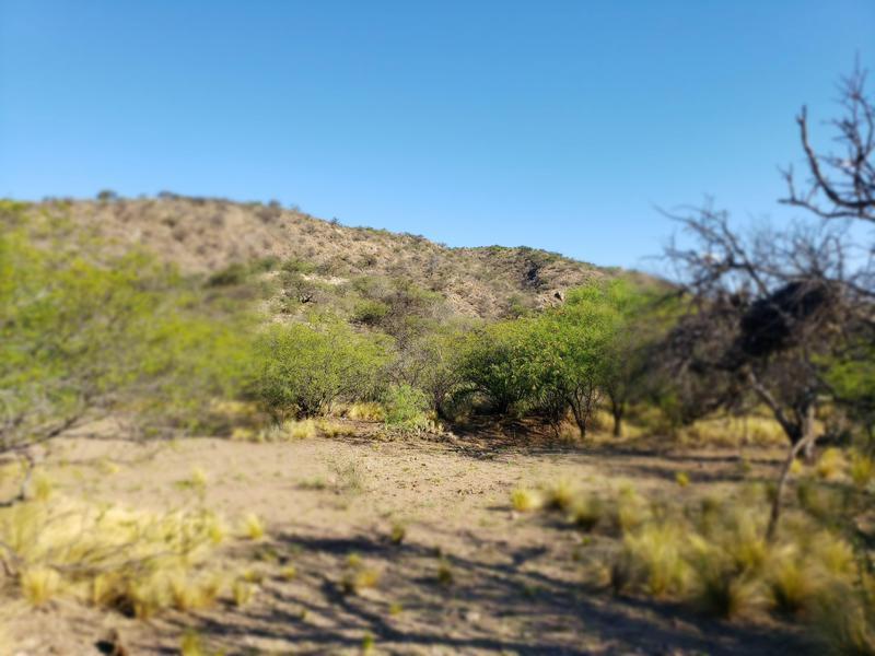 Foto Campo en Venta en  San Fco Del Monte De Oro,  Ayacucho  San Fco del Monte de Oro, chacra con monte