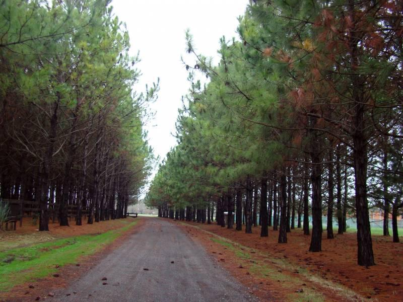 Foto Chacra en Venta en  La Macarena,  Countries/B.Cerrado (Exaltación)  La Macarena
