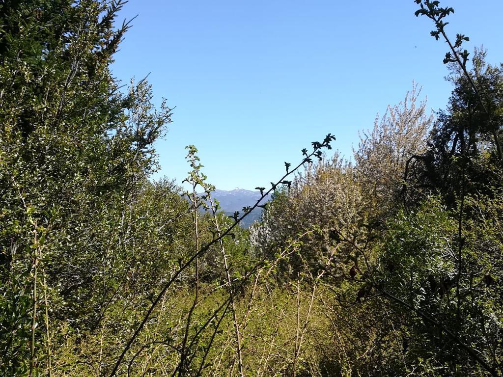 Foto Terreno en Venta en  San Martin De Los Andes,  Lacar  Las Vertientes
