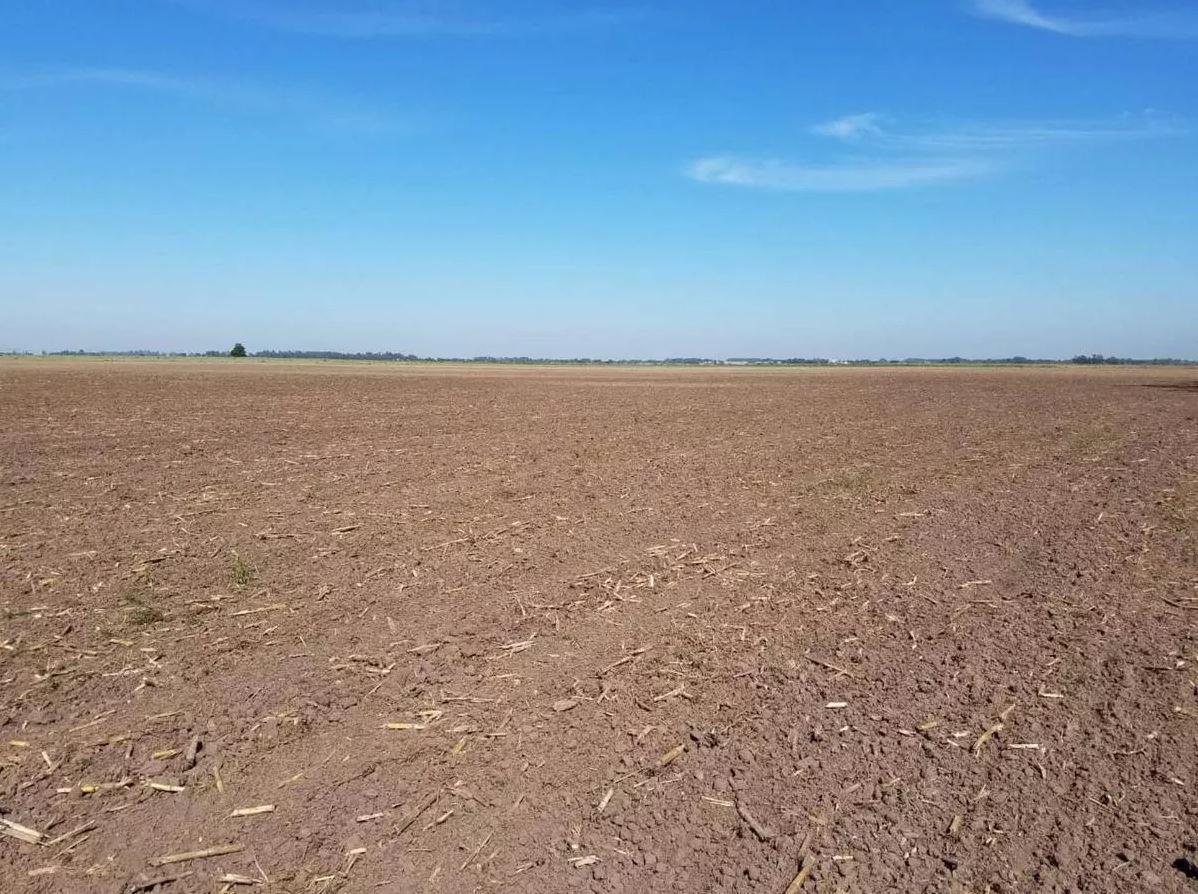 Foto Campo en Venta en  Arturo Segui,  La Plata  427 e/  241 y 262