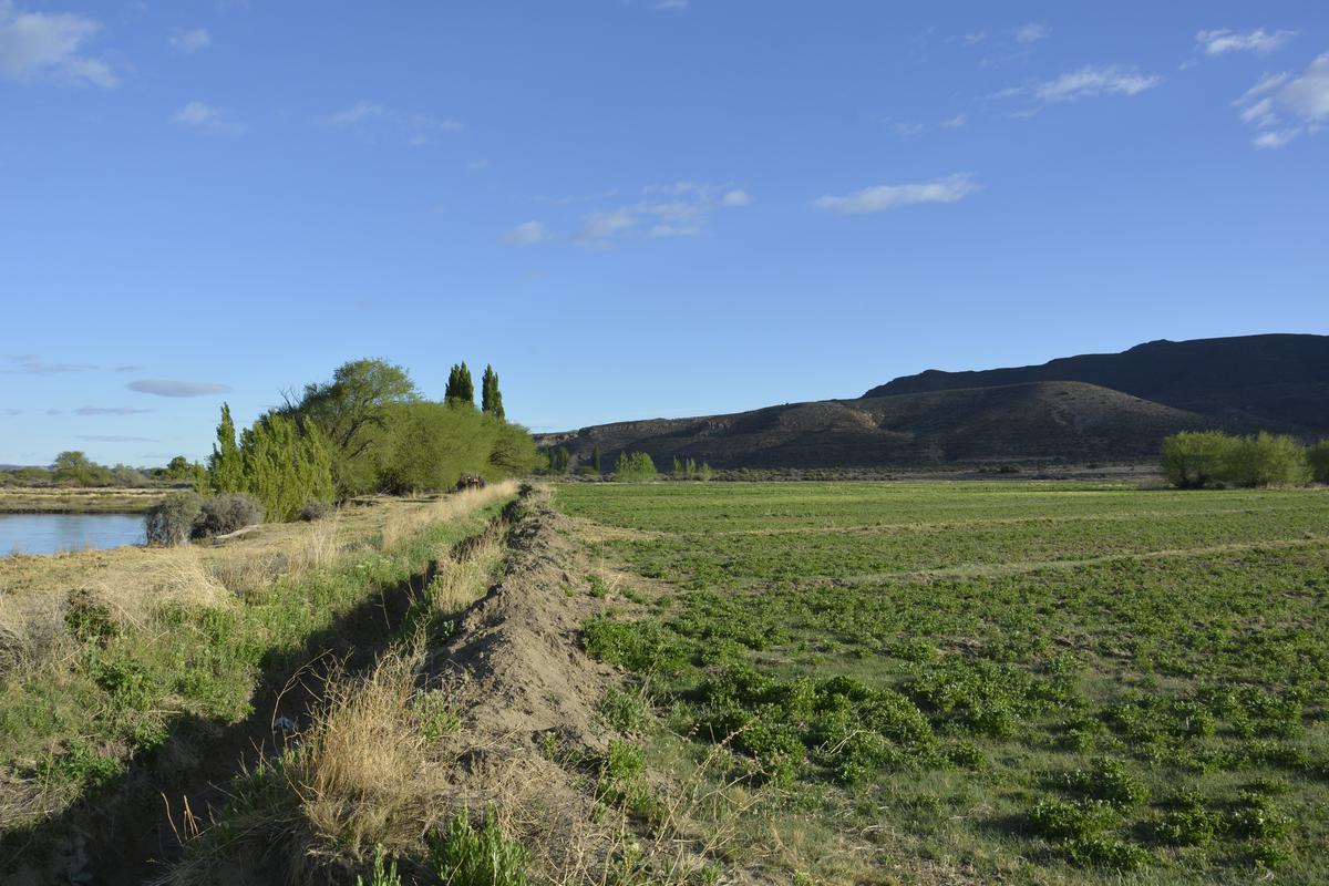 Foto Campo en Venta en  Languiñeo ,  Chubut  Paso del Sapo