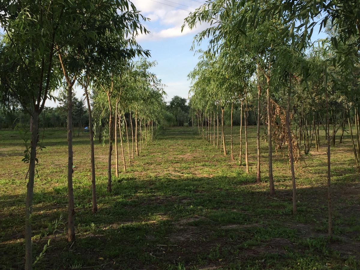 Foto Quinta en Venta en  Parana De Las Palmas S. Fernando,  Zona Delta San Fernando  Paraná de Las Palmas