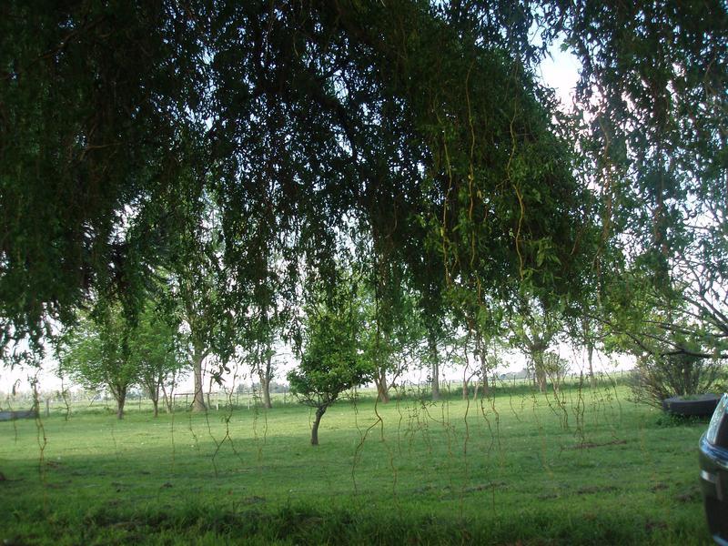 Foto Terreno en Venta en  Cañuelas ,  G.B.A. Zona Sur  Ruta Nacional 205, km. 74