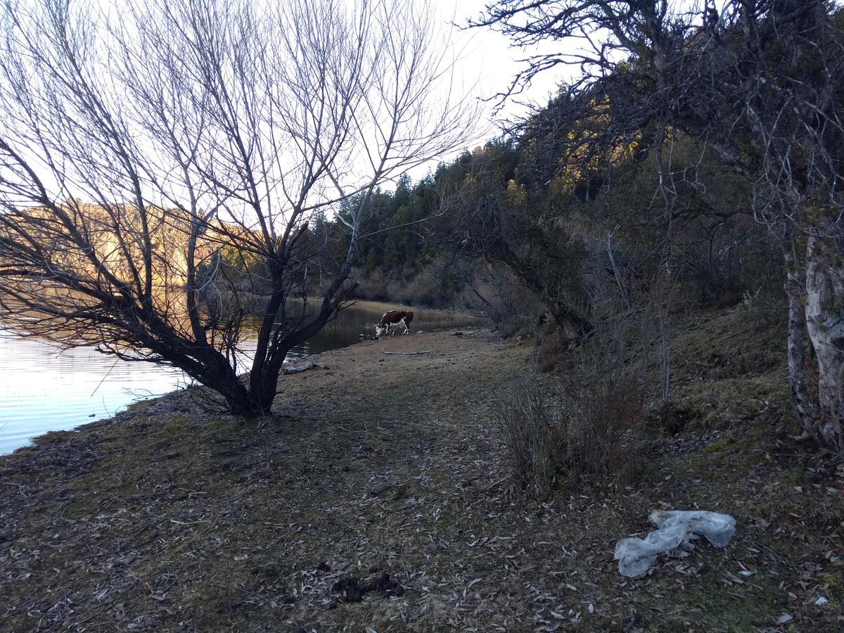 Foto Terreno en Venta en  Cholila,  Cushamen  Lago Carlos Pellegrini, Cholila