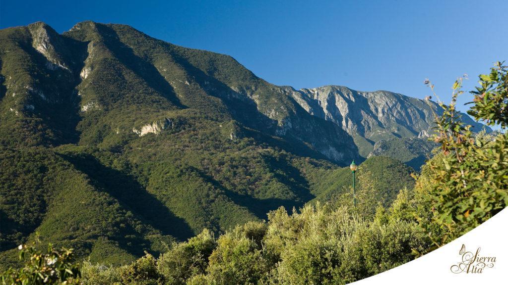Foto Casa en Venta en  Sierra Alta 9o Sector,  Monterrey  Casa Proyecto en Venta Sierra Alta 9 Sector Carretera Nacional Monterrey N L $22,900,000