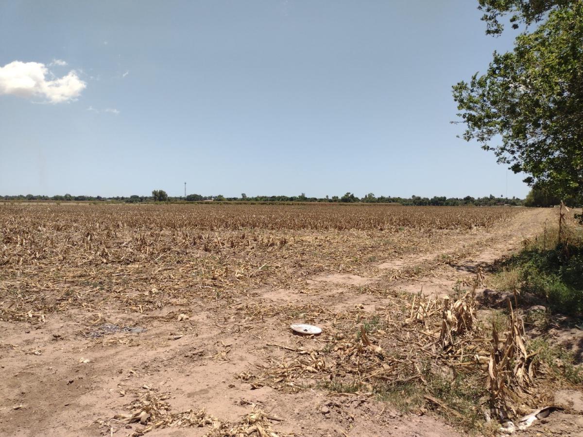 Foto Terreno en Venta en  Guasave ,  Sinaloa  EN VENTA TIERRAS PARA INVERSIONISTA Y URBANIZADORES, 3.81 HECTAREAS, AL FINALIZAR LA AVE. BENIGNO VALENZUELA