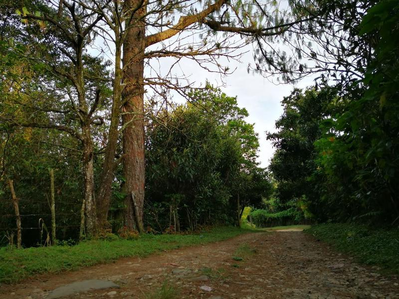Foto Terreno en Venta en  Cuauhtémoc,  Coatepec  TERRENO SOBRE LA CARRETERA