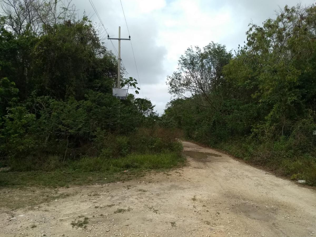 Foto Terreno en Venta en  Doctores II,  Cancún  Terreno Una Hectarea Col Doctores, Cancun