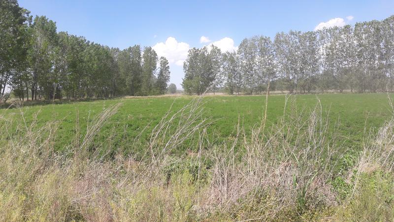 Foto Farms en Venta en  San Carlos ,  Mendoza  San Carlos