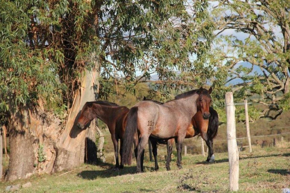 Foto Quinta en Venta en  Solís de Mataojo ,  Lavalleja  Solis de Mataojo