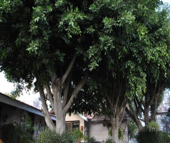 Foto Casa en Venta en  Jurica,  Querétaro  Jurica