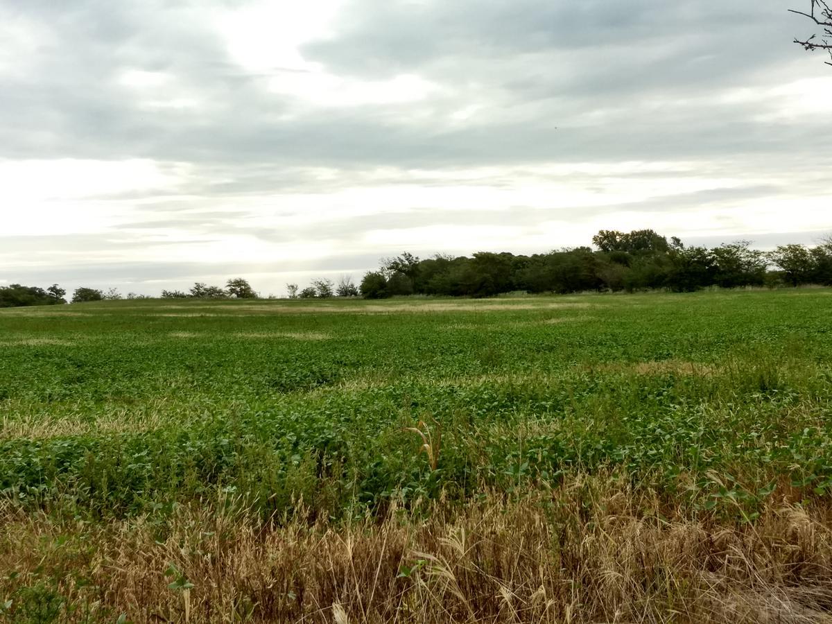 Foto Campo en Venta en  Lincoln,  Lincoln  Lincoln