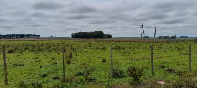 Foto Campo en Venta en  Tres Islas ,  Cerro Largo  Tres Islas