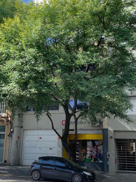 Foto Edificio Comercial en Alquiler en  Villa Crespo ,  Capital Federal  Forest al 500 y Federico Lacroze - Edificio Comercial Varios Rubros