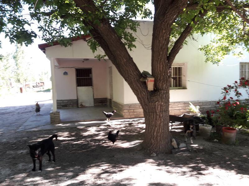 Foto Chacra en Venta en  Mainque,  General Roca  MAINQUE
