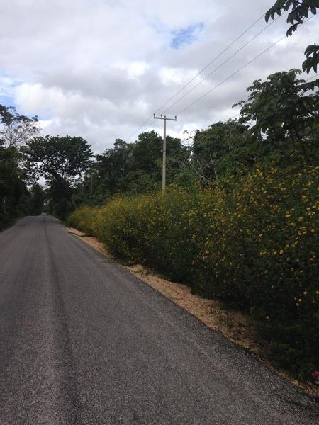 Foto Terreno en Venta en  Puerto Morelos,  Puerto Morelos  Terreno ruta de los cenotes 30 ha.