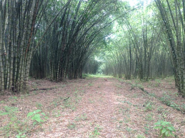 Foto Quinta en Venta en  Norte de Esmeralda,  Esmeraldas  Canton Golondrinas