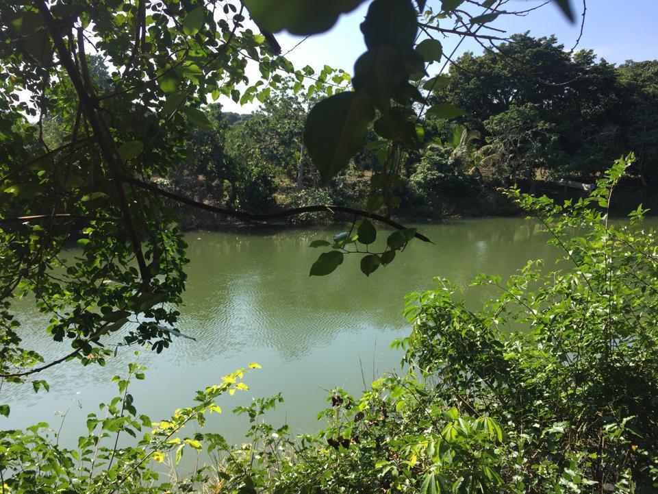 Foto Terreno en Venta |  en  Ejido Isla de Juana Moza,  Tuxpan  TERRENO FRENTE AL ESTERO DE JUANA MOZA