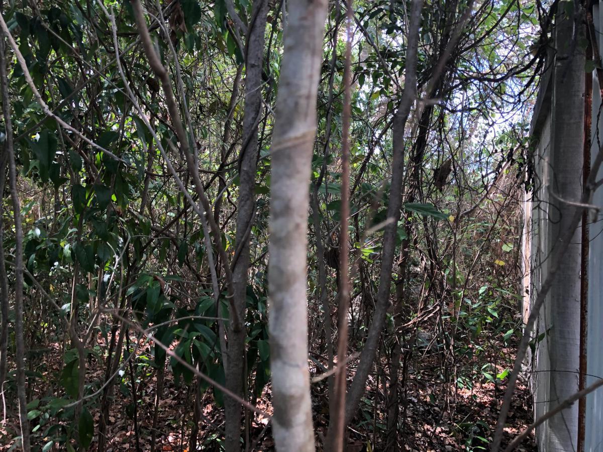 Foto Terreno en Venta en  Alamos I,  Cancún  Alamos I