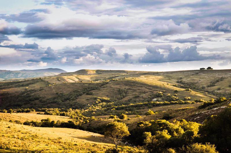 Foto Campo en Venta en  Castillos ,  Rocha  488has pintorescas en Rocha