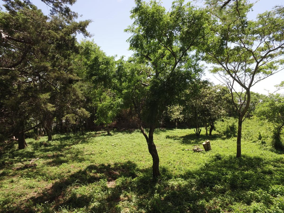 Foto Terreno en Venta en  Santana,  Santa Ana  Entre árboles / Exc vista / Seguridad 24/7