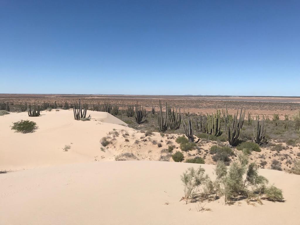"""Foto Casa en Venta en  Hermosillo ,  Sonora  TERRENO EN VENTA """"SAHUIMARO"""" A 100 KM DE HERMOSILLO"""