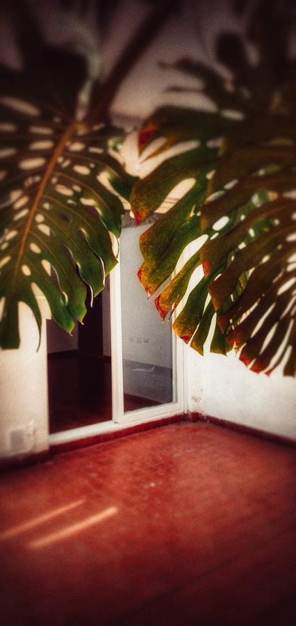 Foto Departamento en Venta en  Centro,  Rosario  1 Dormitorio con gran patio - Paz en el centro - Entre Ríos 1329 01-02