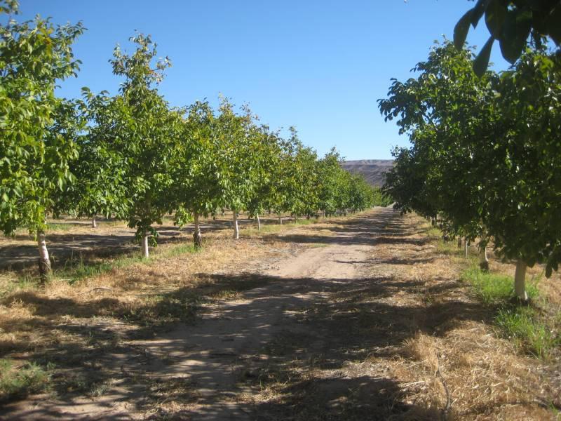 Foto Campo en Venta |  en  Calingasta ,  San Juan  Ruta al 400