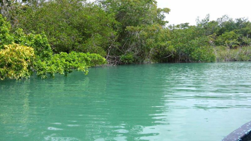Foto Terreno en Venta en  Bacalar ,  Quintana Roo  TERRENO EN LA RIBERA DEL RIO HONDO