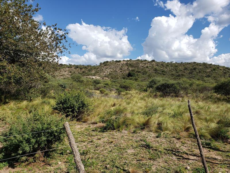 Foto Terreno en Venta en  San Fco Del Monte De Oro,  Ayacucho  San Fco del Monte de Oro, chacra con monte  # 299