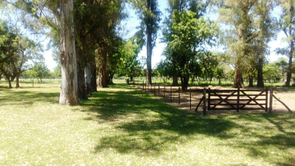 Foto Campo en Venta en  Zarate,  Zarate  25 Has. Escalada