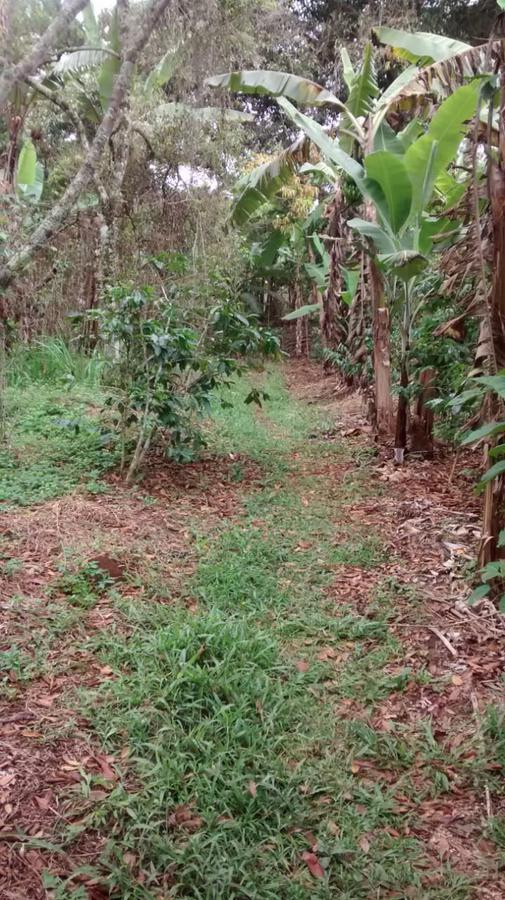 Foto Terreno en Venta en  Teocelo ,  Veracruz  Teocelo