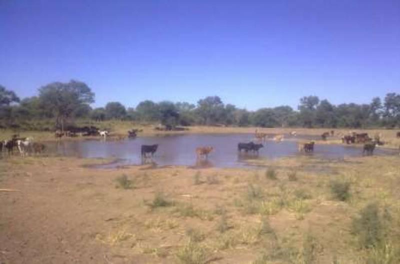Foto Campo en Venta en  San Martin ,  Santiago Del Estero  Ruta 34 al 600