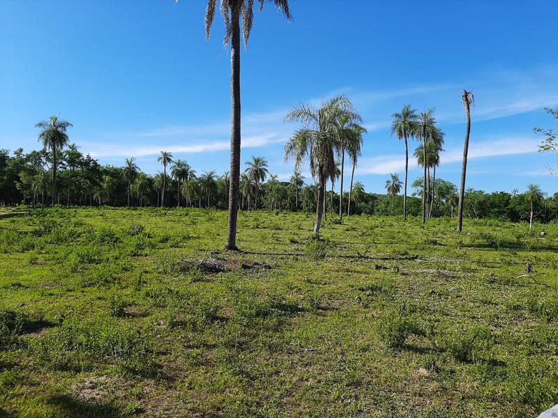 Foto Campo en Venta en  Paraguarí,  Paraguarí  LA COLMENA