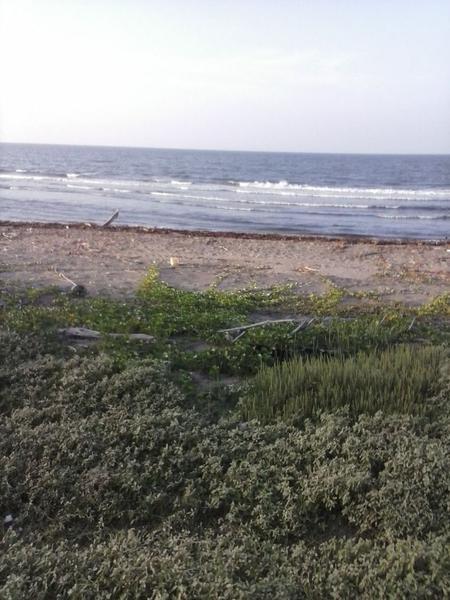 Foto Terreno en Venta en  Lomas del Mar,  Alvarado   TERRENO EN VENTA  CON PLAYA ESTADO DE VERACRUZ