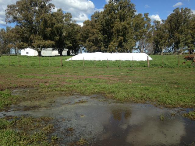 Foto Campo en Venta en  Pardo,  Las Flores  A 7 km RN3 y al 200
